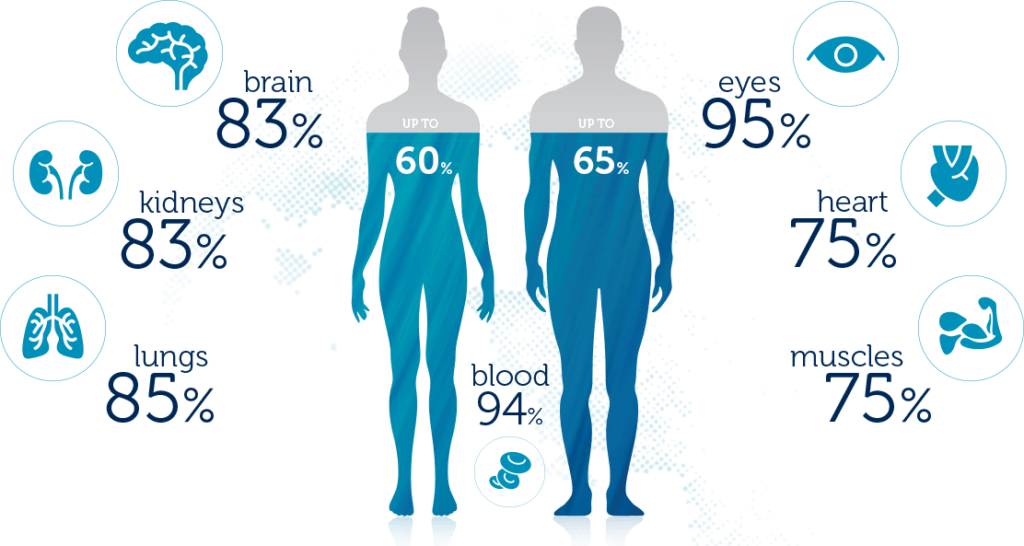 amount of water inside the body